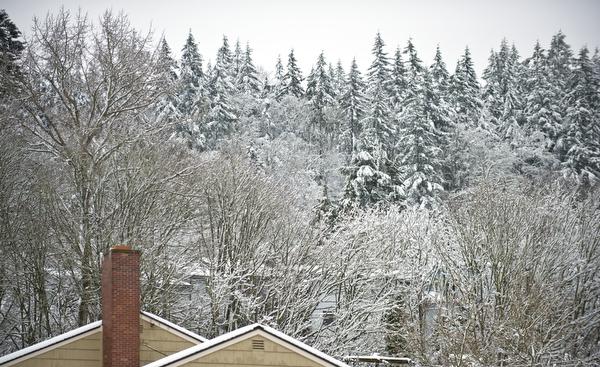february-snow-49