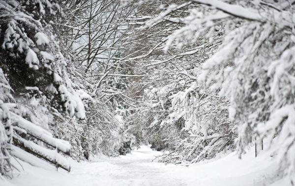 february-snow-50