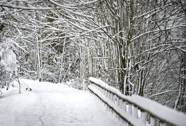 february-snow-51