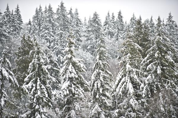 february-snow-52