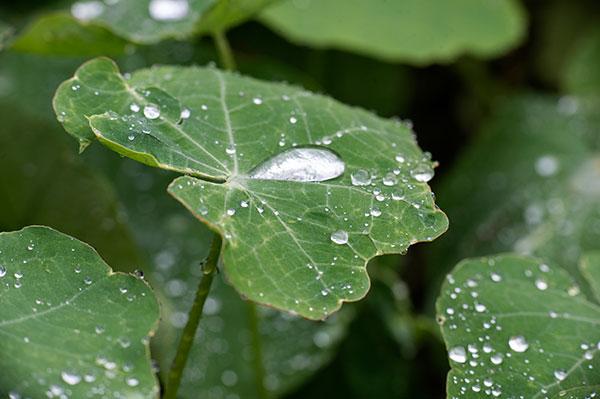 blog-water-drops-macro-a