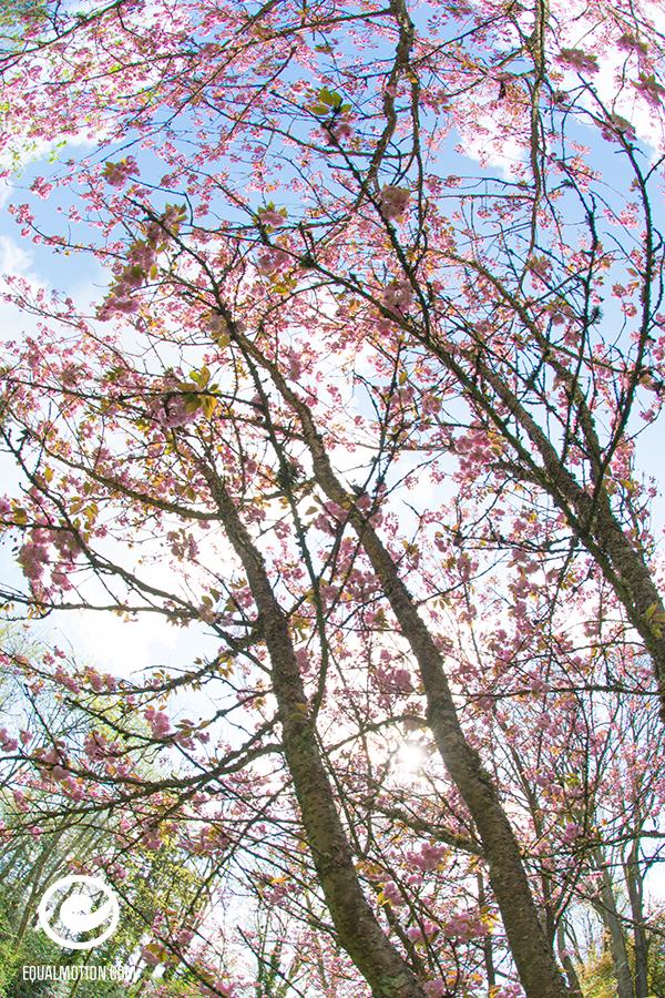 fb-saturday-spring-04