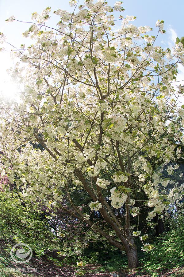 fb-saturday-spring-05