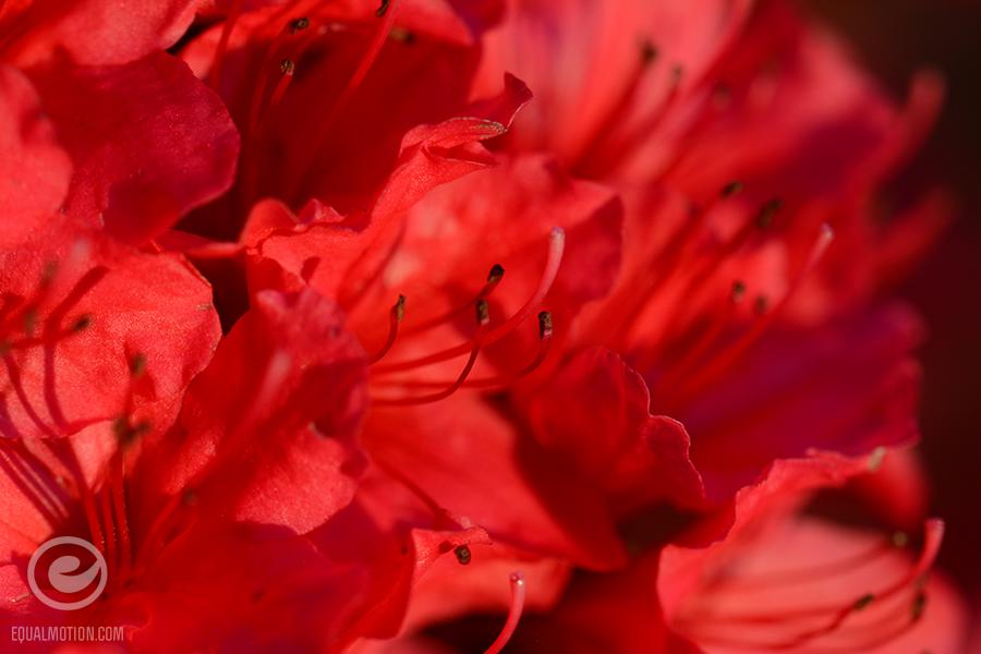 fb-saturday-spring-10
