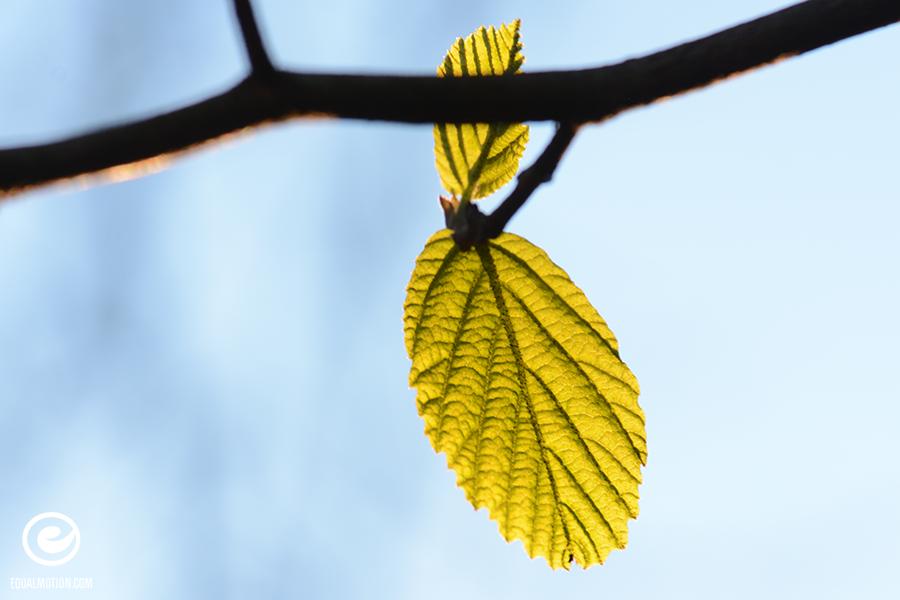 fb-saturday-spring-12