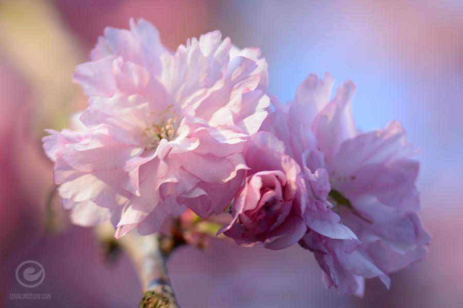 fb-saturday-spring-13