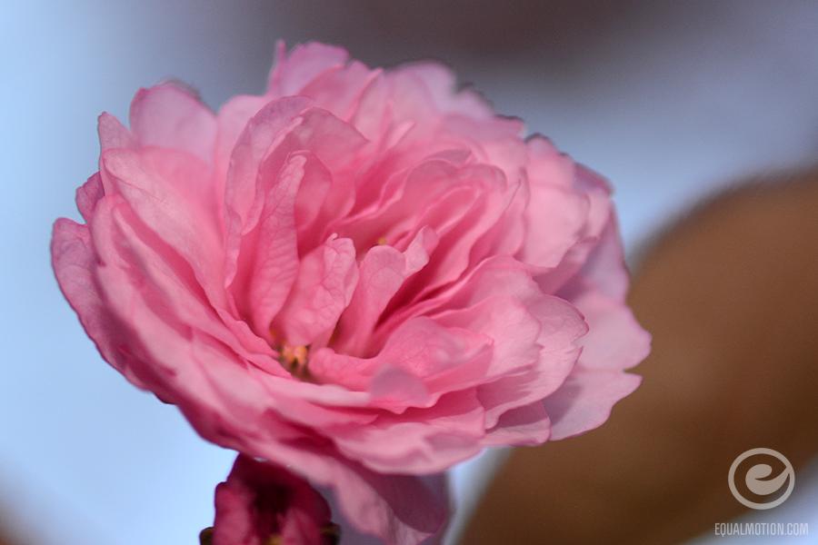 fb-saturday-spring-14