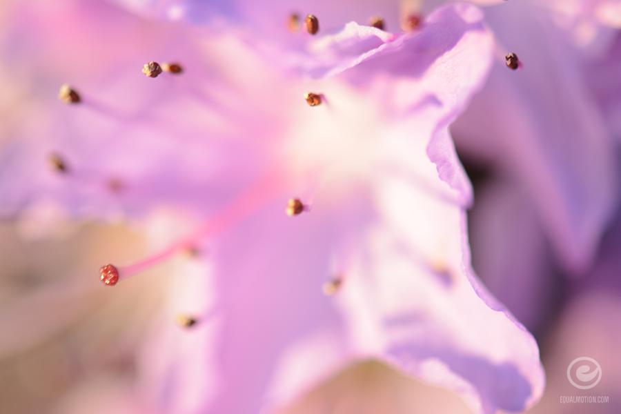fb-saturday-spring-15