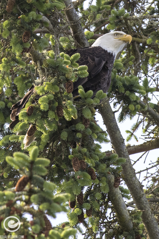 Photos of bald eagles, skateboarding, beaches, ferries and sunsets on Lopez Island in the San Juan Islands.