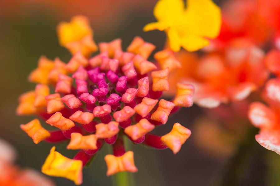 fb-500px-flower