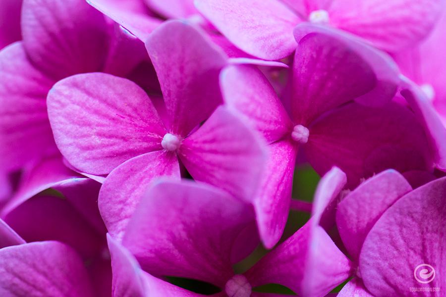 fb-macro-flower