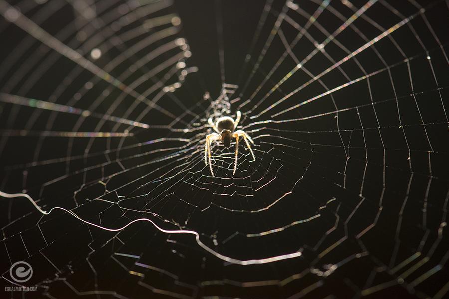 fb-macro-spider