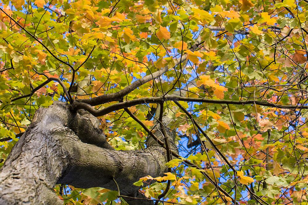 insta-fall-colors-02