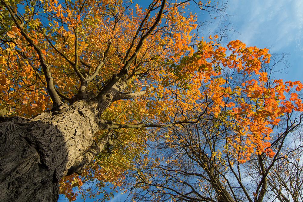 insta-fall-colors-03
