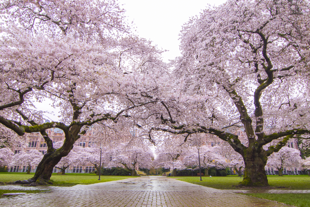 Spring trees photography