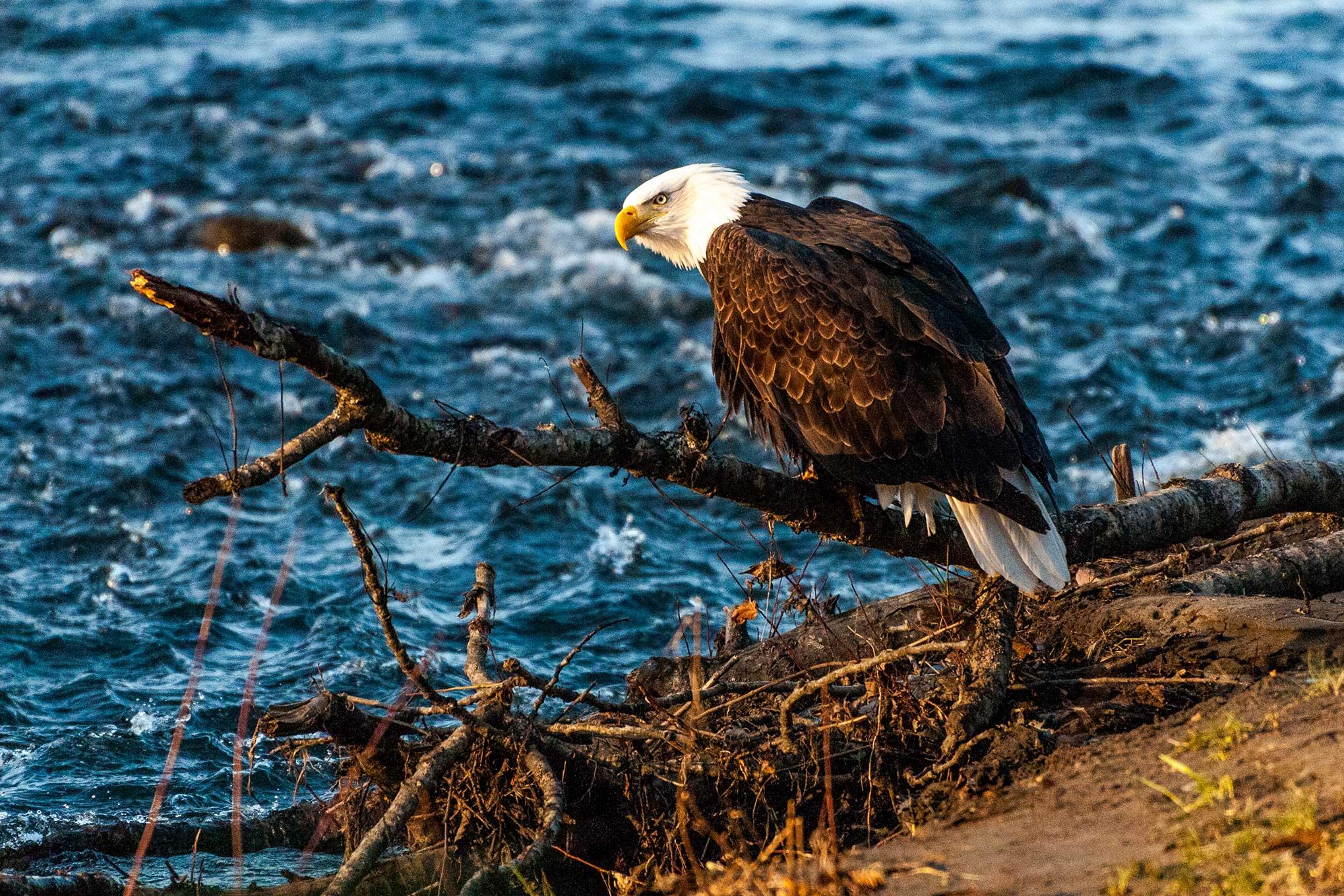 eagle-edit