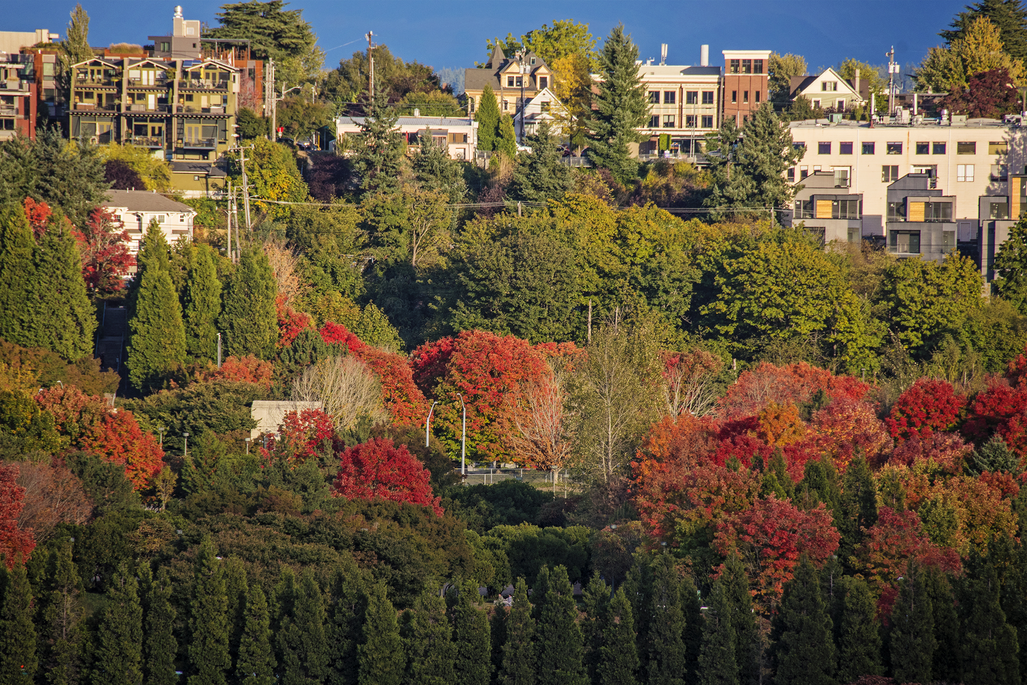 Fall Colors In Seattle - Equal Motion